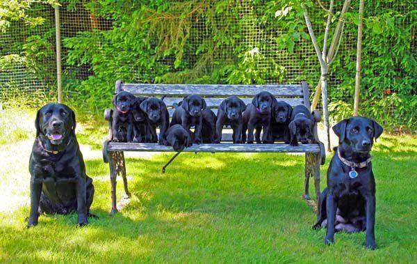benchpuppies