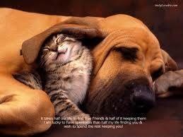 Puppy ear
