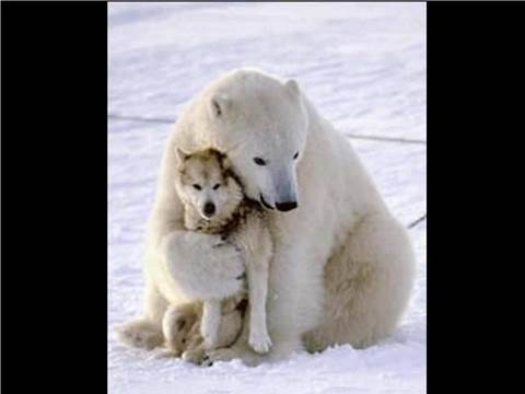 polar and husky