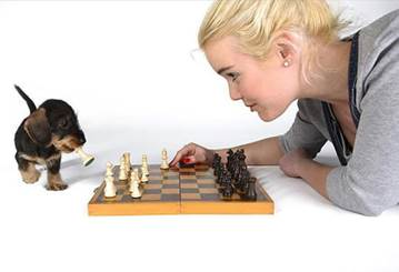 Chess pup